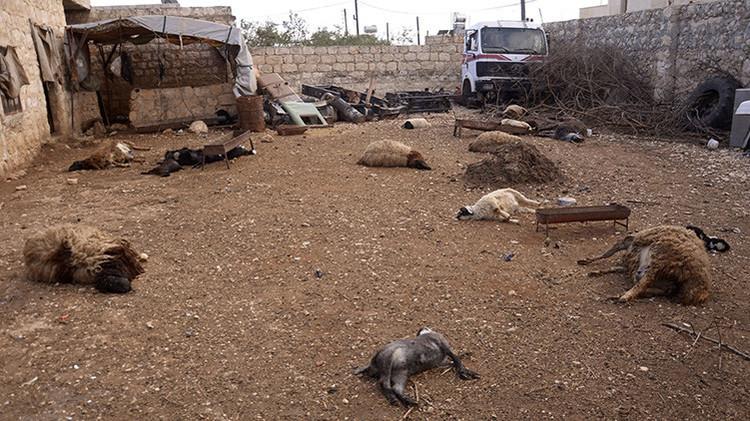 """""""Los terroristas poseen armas químicas y las han utilizado en Siria e Irak"""""""