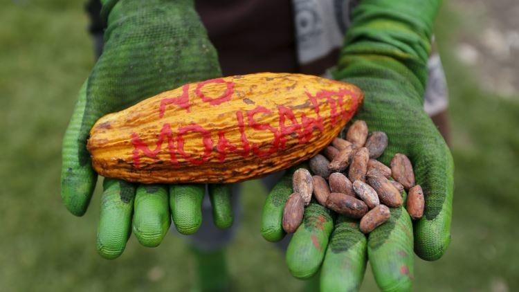 ¿Se cae Monsanto? El gigante recorta su plantilla mientras se reducen sus ganancias