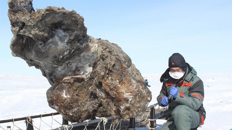 Increíble hallazgo de científicos rusos hace probable la 'resucitación' de los mamuts