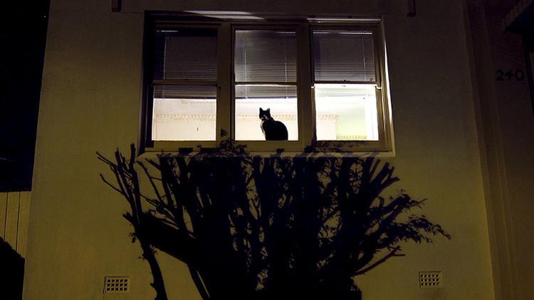 Australia defiende su decisión de matar a dos millones de gatos salvajes