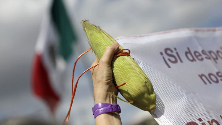 El preocupante plan que tiene Monsanto para México