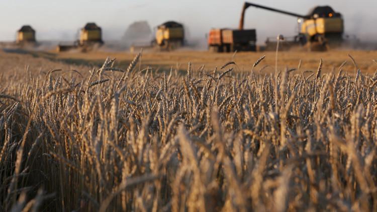 Rusia obtiene en 2015 su tercera cosecha de trigo más grande desde la desintegración de la URSS