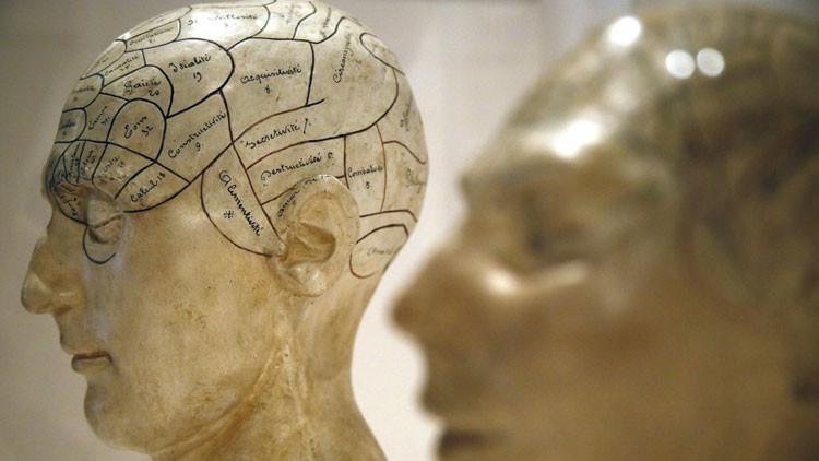 Modelos frenológicos de yeso, que muestran diferentes partes del cerebro