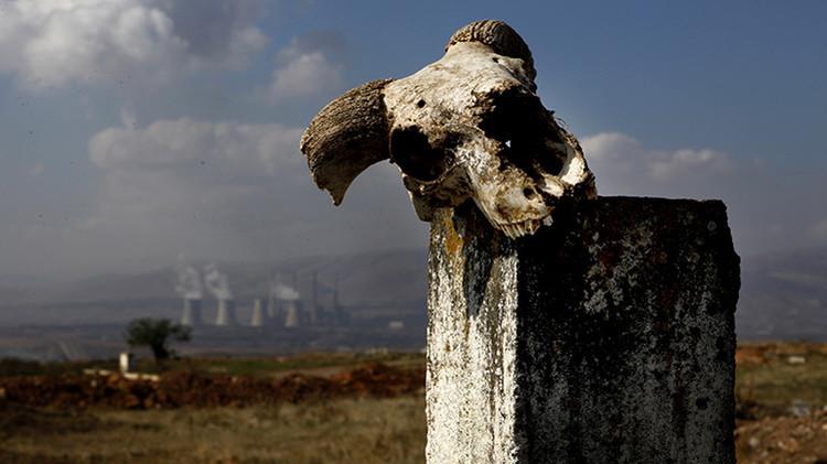 Gran Mortandad: Hallazgos inesperados reformulan la teoría sobre la mayor extinción en la Tierra