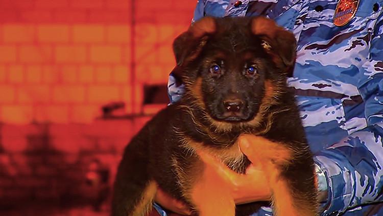 Video: Rusia regala un cachorro de pastor a la Policía francesa que emociona a la Red