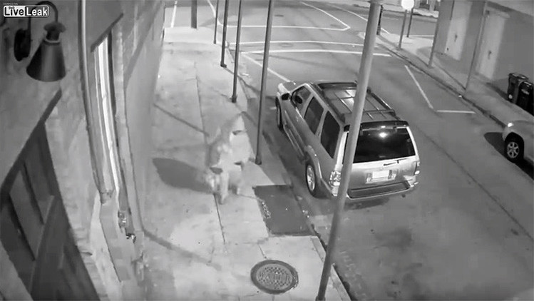 Video: Intentó fusilar a un joven pero inesperadamente su arma falló