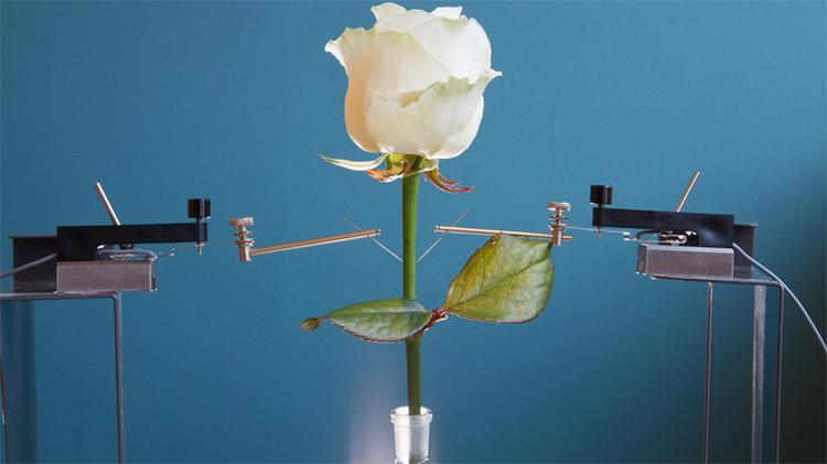 Den la bienvenida a las primeras flores electrónicas del mundo