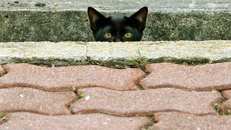 Twitter se llena de gatos con el fin de apoyar la operación antiterrorista en Bélgica