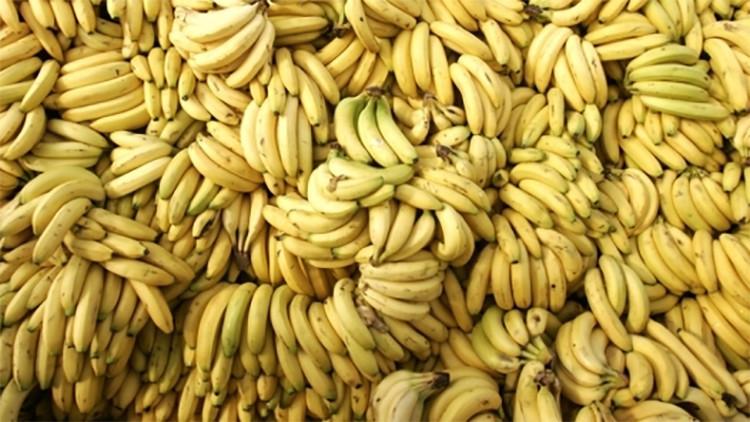 Los plátanos, en peligro de extinción: Un hongo mortífero amenaza los cultivos