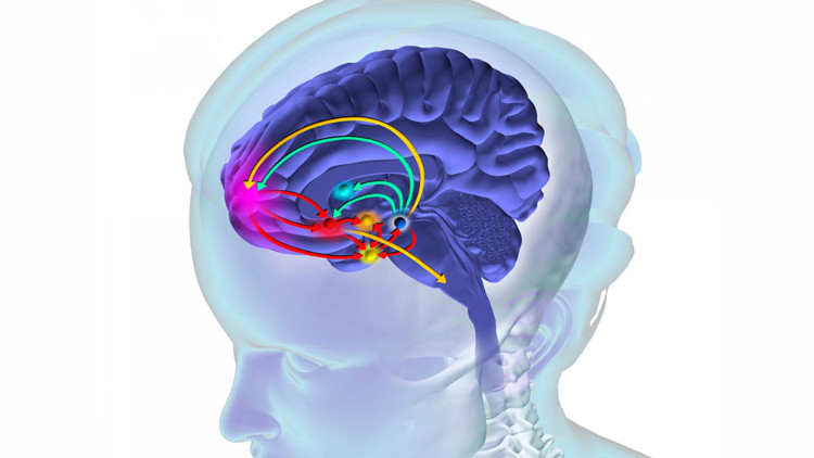 El cerebro en riesgo: ¿cuáles son los perjuicios de consumir drogas?