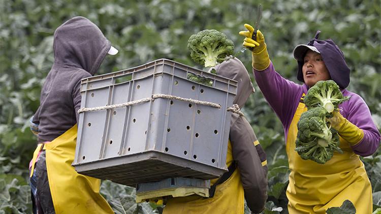 """América Latina aumentará los suministros agrícolas a Rusia pese a la presión de Occidente"""