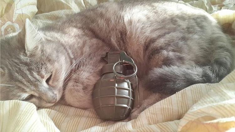 El Estado Islámico difunde imágenes de gatitos con bombas para reclutar yihadistas