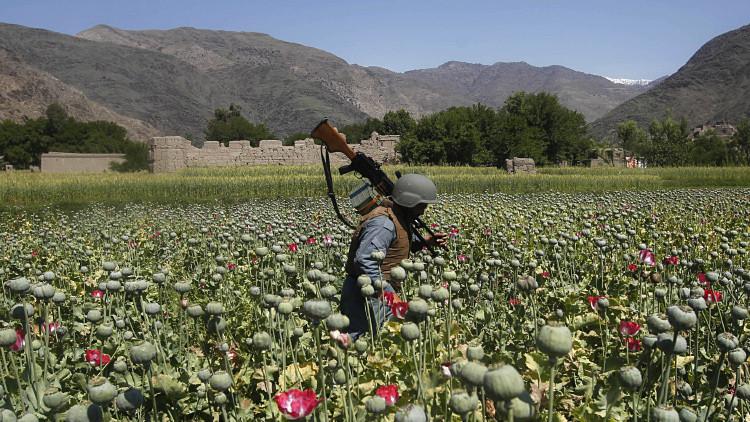 Rusia: Turquía fabrica heroína con opio afgano y la envía a Europa