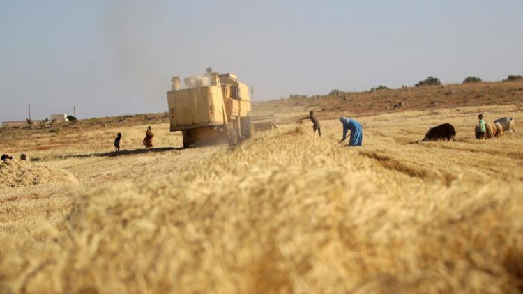 La lucha por el pan, el arma más insospechada de la guerra siria