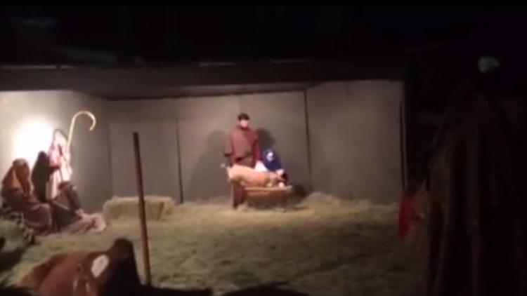 ¿Se robó la Navidad?: esta cabra saltarina casi arruina la fiesta