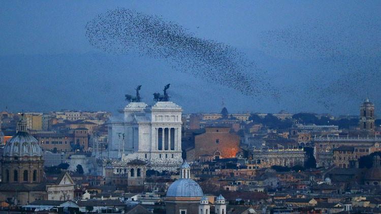 Ciudadanía y autoridades pierden la paciencia: caos en Roma por incursión de estorninos (Video)