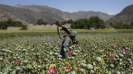 Policías afganos destruyen una plantación de adormidera en la provincia de Kunar