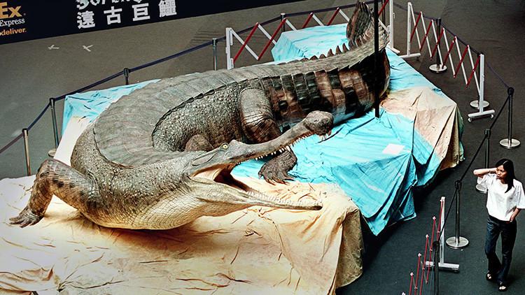 Hallan en Túnez fósiles del Machimosaurus rex, el mayor 'cocodrilo' marino jamás hallado