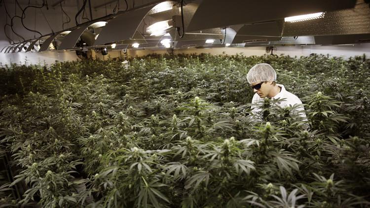 Invierta en marihuana: una empresa de cannabis sale al mercado de valores de EE.UU.