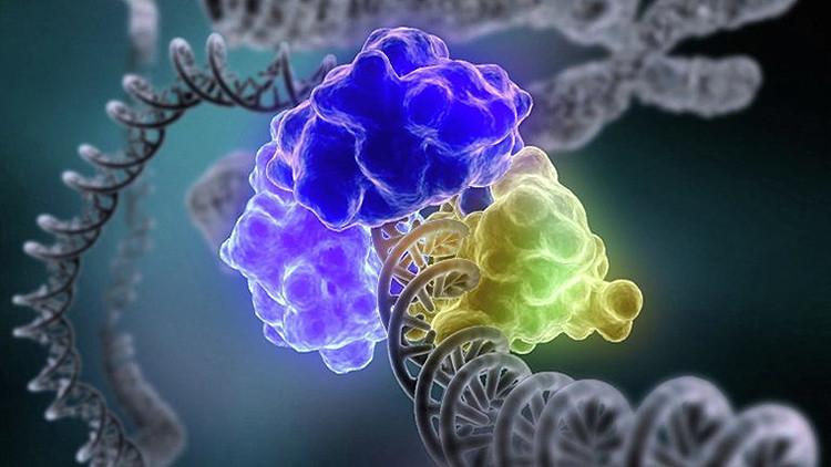 Revelan por qué el cromosoma femenino no es necesario para nuestra supervivencia