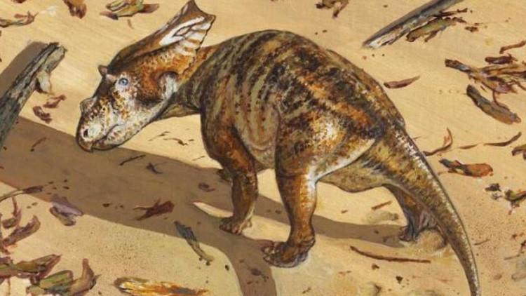 El esqueleto íntegro de un dinosaurio 'bebé' de 75 millones de años entusiasma a los científicos