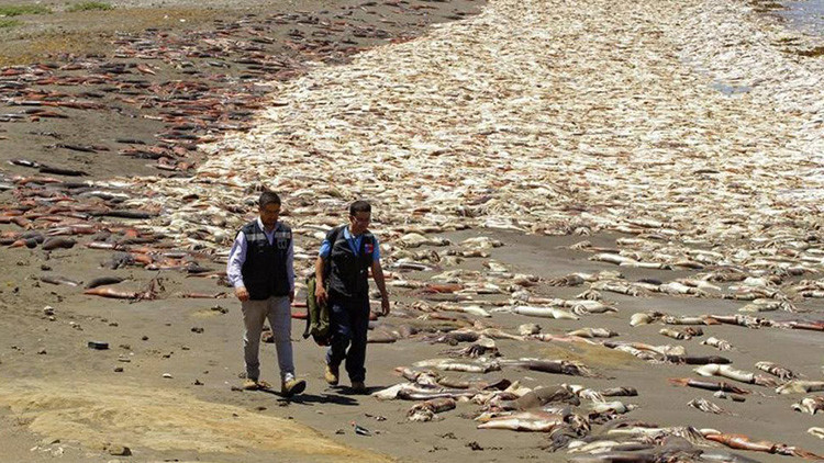 ¿El Niño, fuiste tú?: Miles de calamares mueren varados en una costa de Chile