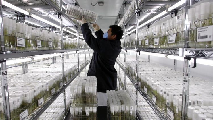 Científicos peruanos investigan para cultivar papas en Marte
