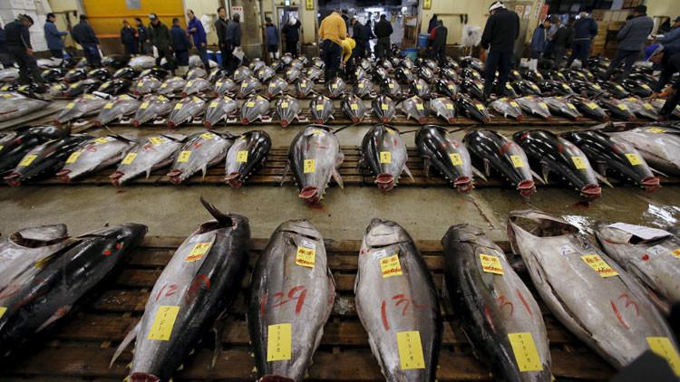 Los océanos se vacían: peces desaparecen a velocidades récord