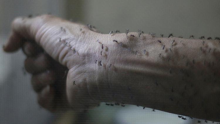 España, Portugal, Dinamarсa: Zika se propaga por Europa