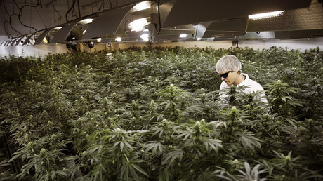 El cultivador Ryan Douglas riega marihuana en una sala de cultivo de la empresa Tweed