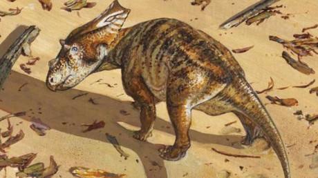 Imagen reconstruida de una cría de Chasmosaurus