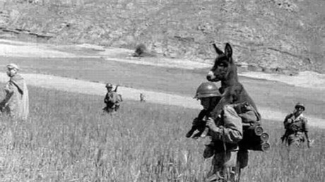 Donkey riding on the back of a WWII soldier