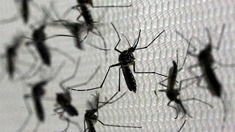 La OIEA propone esterilizar mosquitos para combatir el zika