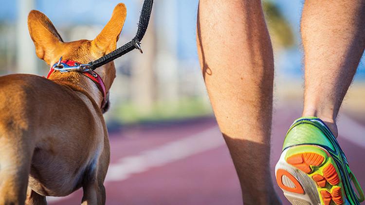 Los perros ayudan a curar el cáncer en personas y los médicos revelan cómo