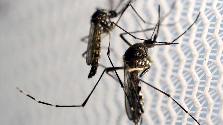 El zika prepara sigilosamente un ataque contra los refugiados en Europa
