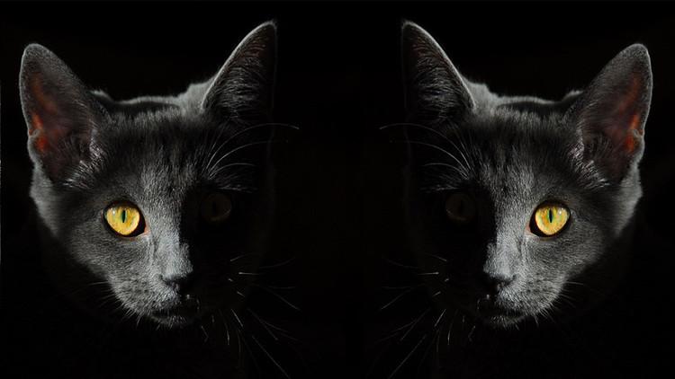 ¿Su gato lo está vigilando?: Científicos describen una rara enfermedad mental