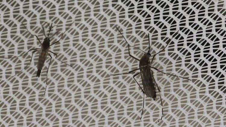 Temibles pandillas latinoamericanas impiden la lucha contra el zika