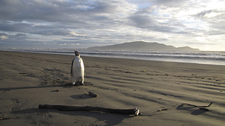 Video: Un gigantesco iceberg puede causar la extinción de los pingüinos adelaida en la Antártida