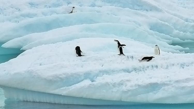 Un iceberg gigante causa la muerte de 150.000 pingüinos en Antártida