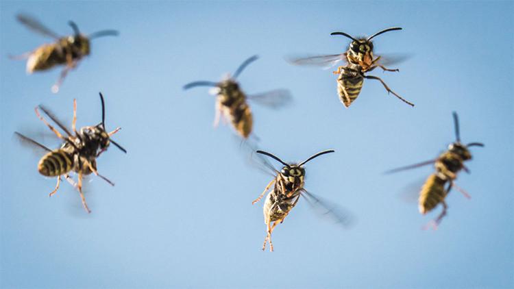 Video: Confirmado, así ven el mundo las avispas