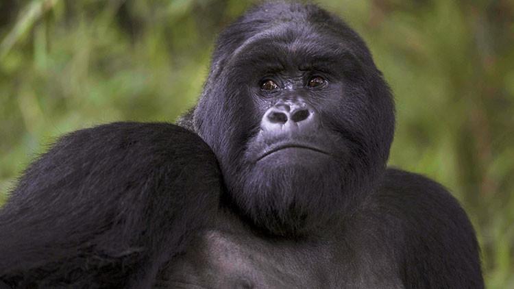 """""""Los monos evolucionaron de los judíos"""": columnista turco dice que Darwin iba contra los musulmanes"""