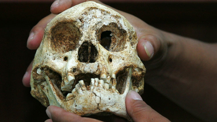 Nuevo hallazgo: el 'hobbit', nuestro ancestro más pequeño y enigmático, divide a los científicos