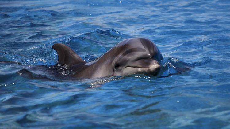 Sacan a un raro delfín del mar para hacerse selfis con él y lo matan (Video, Fotos)