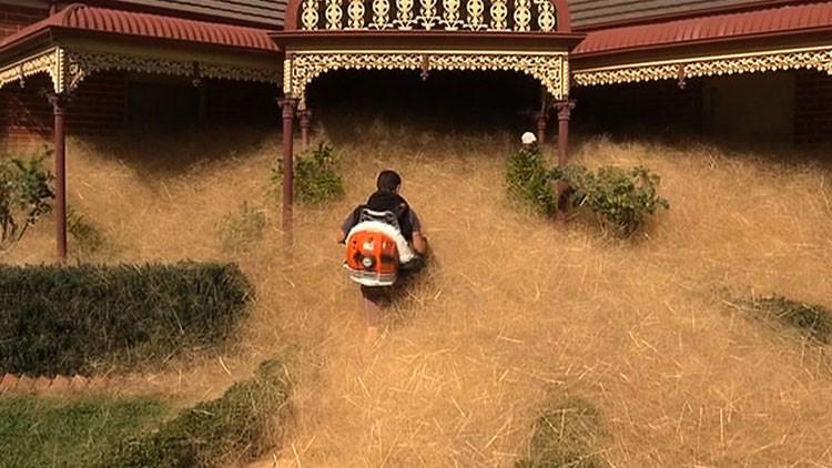 Pánico peludo: ciudad australiana está siendo 'devorada' por una planta extraña (Video)