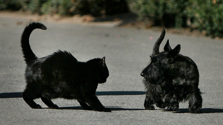 'Furia de titanes': Científicos reabren el debate entre los amantes de los perros y los gatos