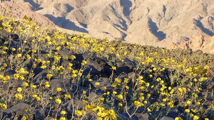 Cuando la vida vence a la muerte: el lugar más caluroso de la Tierra se cubre de flores