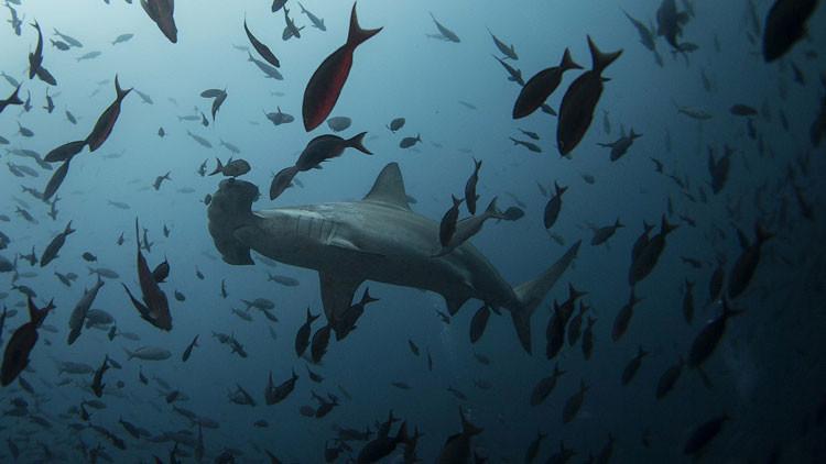 Revelan el origen del desconcertante zumbido que 'inunda' los rincones más profundos del océano