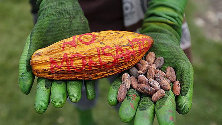 Nueva polémica por el glifosato: culpan a Monsanto de manipular estudios