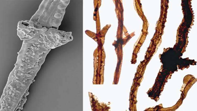 Hallazgo inesperado: El organismo terrestre más antiguo se dedicaba a podrir la materia
