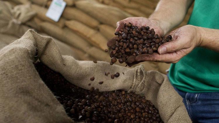 Dos grandes empresas de café admiten el riesgo del trabajo 'esclavo' en su cadena de suministro